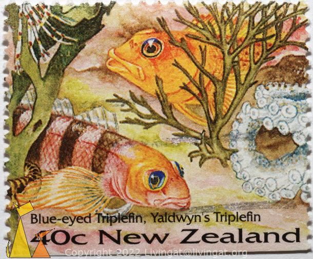 Triplefins, New Zealand, stamp, fish, Blue-eyed triplefin, Yaldwyn's triplefin