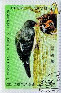 Tristrams Woodpecker, DPRK, North Korea, stamp, bird, 1978, 25, Tristam, Dryocopus richardsi, Dryocopus javensis richardsi