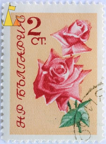 Two Roses, Bulgaria, stamp, plant, flower, Rosa spp, 2 Ct