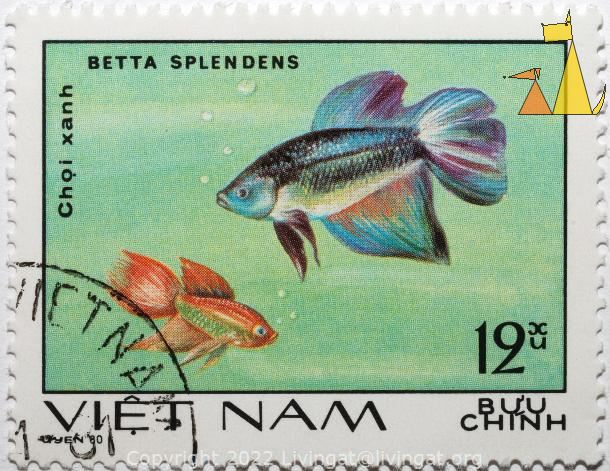 Two Siamese fighting fishes, Viêt Nam, Vietnam, stamp, fish, 12 xu, Bu'u Chính, uyen 80, Choi xanh, Betta splendens