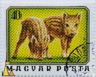 Two Young Boars, Magyar, Hungary, stamp, mammal, pig, Sus scrofa, Posta, 40 f, 1976, Gal Ferenc