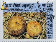 Umber-brown Puffball, Royaume du Cambodge, Cambodia, stamp, mushrom, postes, 2001, 1500 R, Lycoperdon umbrinum