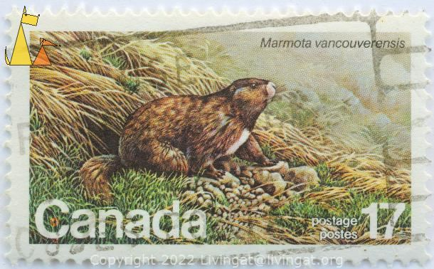 Vancouver Island marmot, Canada, stamp, mammal, rodent, Marmota vancouverensis, 17, postage, postes
