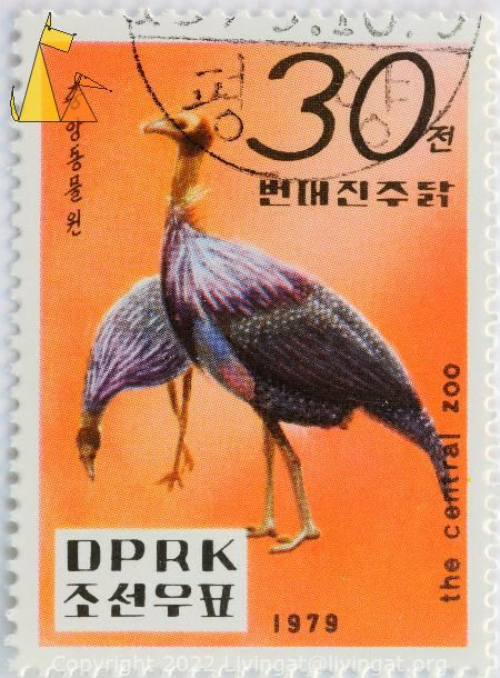 Vulturine Guineafowl, DPRK, North Korea, stamp, bird, the central zoo, 1979, 30, Acryllium vulturinum