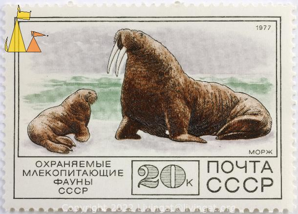 Walrus with Young, CCCP, Russia, stamp, mammal, Морж, noyta, 20 k, 1977, young, Odobenus rosmarus