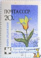 Water-lily tulip, CCCP, Russia, stamp, plant, Tulipa kaufmanniana rgl, flower, 20 K, Tulipa kaufmanniana Regel, noyta