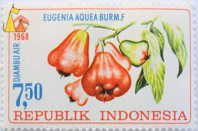 Water Cherry, Republik Indonesia, Indonesia, stamp, plant, fruit, 7.50, 1968, Djambuair, Eugenia aquea burm.f, Syzygium aqueum