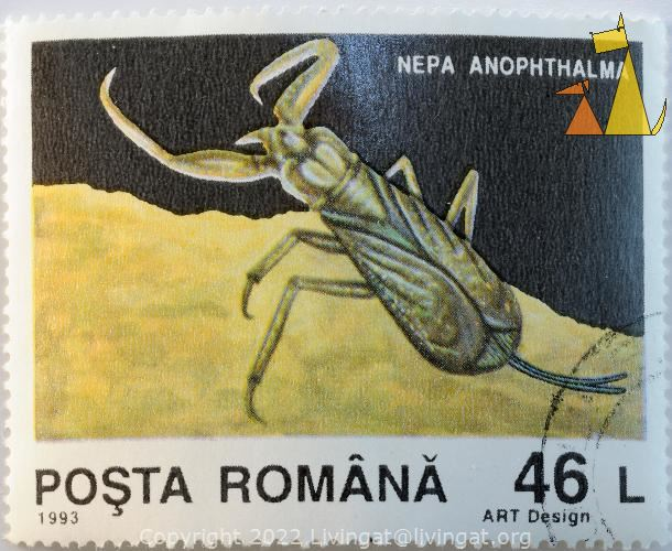 Water scorpion, Romana, Rumania, stamp, insect, Nepa anophthalma, Posta, 1993, 46 L, Art Design