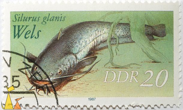 Wels, DDR, Germany, stamp, fish, 20, 1987, Wels, Silurus glanis