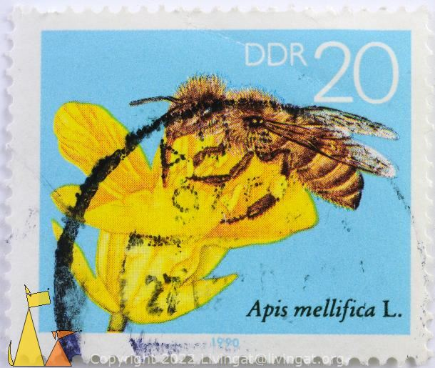 Western Honeybee, DDR, Germany, stamp, insect, bee, flower, yellow, 1990, 20, Apis mellifica, Apis mellifera