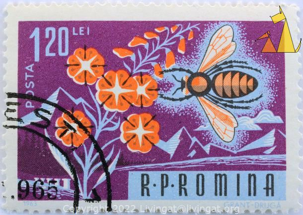 Western Honeybee, RP Romina, Romania, stamp, insect, bee, Grant, Gruga, 1963, 1.20 Lei, Posta, Apis mellifera