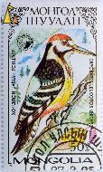 White-backed Woodpecker, Mongolia, stamp, 1987, 50, Becht, Dryobates leucotos, Dendrocopos leucotos