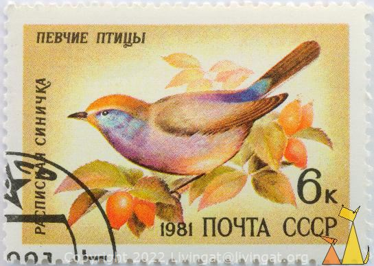 White-browed Tit-warbler, CCCP, Russia, stamp, bird, 1981, noyta, 6 k, rose hip, Leptopoecile sophiae