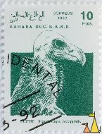 White-headed Vulture, Sahara OCC. R.A.S.D., Western Sahara, stamp, bird, Correos, 1992, 10 PTAS, Buitre, Trigonoceps occipitalis