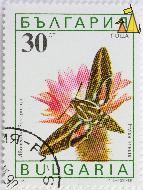 White-lined sphinx, Bulgaria, stamp, insect, butterfly, 30 Ct, nowa, 1990, Hyles lineata, moth