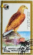 White-tailed Eagle, Mongolia, stamp, bird, Haliaeetus albicilla, 1988, 60