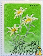 White Edelweiss flower, Nippon, Japan, stamp, plant, flower, 60, Leontopodium fauriei