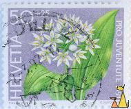 White flower, Helvetia, Switzerland, stamp, plant flower, Pro Juventute 1991, Courvoisier, Verni wyss, 50 +25