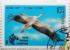 White stork, CCCP, Russia, stamp, bird, Ciconia ciconia, flying, 10+5 K, Noyta, 1991