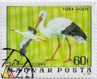 White storks, Magyar, Hungary, stamp, Ciconia ciconia, 60 f, 1976, Posta, Gal Ferenc, Feher Golya