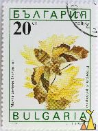 Willowherb Hawk-moth, Bulgaria, stamp, insect, butterfly, 30 Ct, nowa, 1990, Proserpinus proserpina, moth
