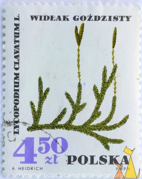 Welcome to Stamps Collector Catalogue, Wolfs-foot clubmoss