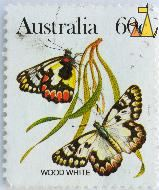 Wood White, Australia, stamp, insect, butterfly, 60 c, Delias aganippe