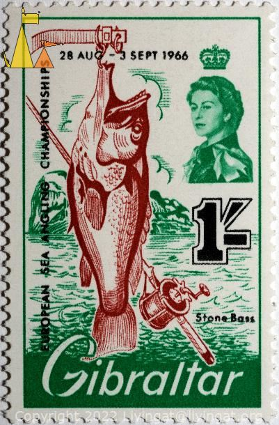 Wreckfish, Gibraltar, stamp, fish, 28 Aug-2 Sept, 1966, European sea angling championship, Stone Bass, Queen Elizabeth II, Polyprion americanus