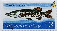 Wyka or Pike, Bulgaria, stamp, fish, 1983, 3 cm, nowa, blue, Wyka, Esox lucius