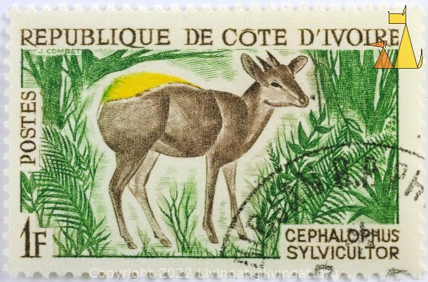 Yellow-backed Duiker, Republique de Cote D'Ivorie, Ivory Coast, stamp, mammal, J Combet, Postes, 1 F, Cephalophus sylvicultor