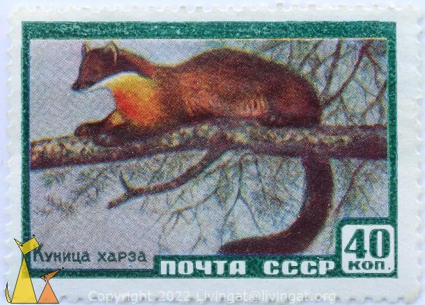Yellow-throated Marten, CCCP, Russia, stamp, mammal, 40 Kon, noyta, Куница харза, Martes flavigula