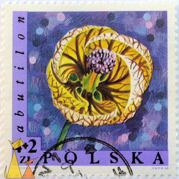 Yellow Abutilon, Polska, Poland, stamp, plant, flower, Abutilon, 4+2 Zl, T Michaluk, PWPW, 68