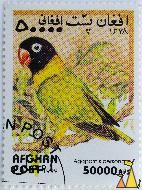 Yellow Lowebird, Afghan, Afghanistan, stamp, bird, post, 1999, 50 000 AFS, Agapornis personata, Agapornis personatus