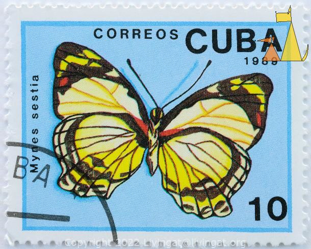 Yellow Numph, Cuba, stamp, insect, butterfly, Correos, 1989, 10, Mynes sestia
