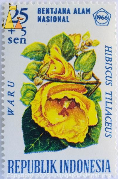 Yellow Sea Hibiscus, Republik Indonesia, Indonesia, stamp, plant, flower, Bentjana Alam, Nasional, 1966, Waru, Hibiscus tiliaceus, 25+5 Sen