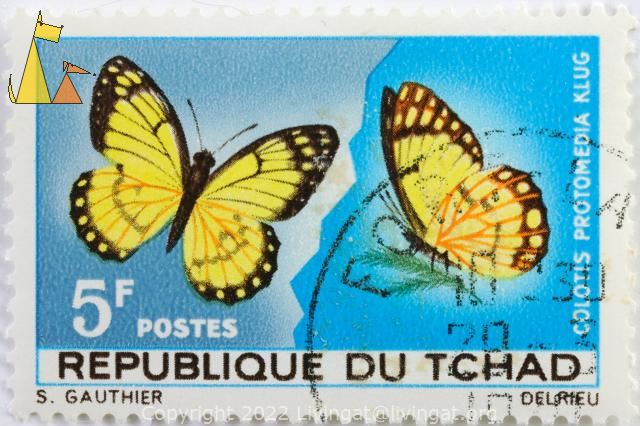 Yellow Splendour, Republique de Tchad, Chad, stamp, insect, butterfly, Klug, 5 F, Postes, S Gauthier, Del Rieu, Colotis protomedia