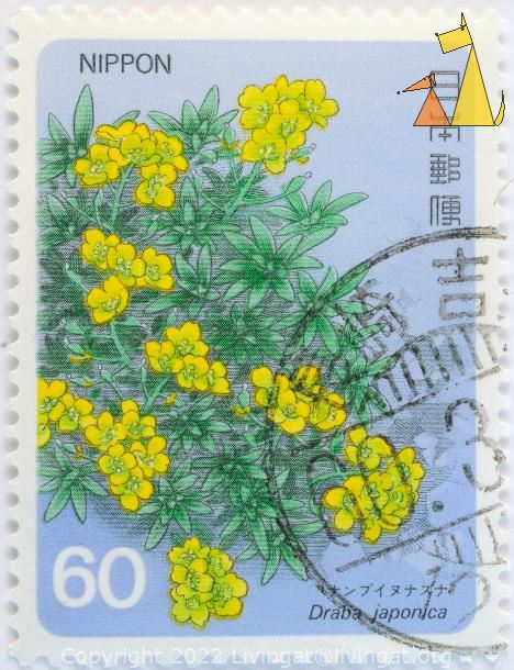 Yellow bush flower, Nippon, Japan, stamp, plant, flower, 60, Draba japonica Maximovicz
