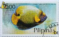 Yellowface Angelfish, Pilipinas, Philippines, stamp, fish, Euxiphipops xanthometapon, Postage, 5.00 p, Pomacanthus xanthometopon