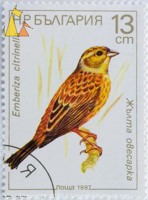 Yellowhammer, Bulgaria, stamp, bird, Emberiza citrinella, nowa, 1987, 13 cm