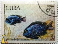 Yellowtail Damselfish, Cuba, stamp, fish, Microspathodon chrysurus, 3, correos, 1969