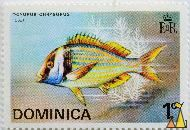 Yellowtail Snapper, Dominica, stamp, fish, 1 c, Cola, EIIR, Ocyurus chrysurus