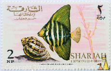 Young Sailfin, Sharjah and Dependencies - Khor Fakkan, Sharjah, stamp, fish, 2 NP, Harrison and Sons Ltd London, Zebrasoma velifer